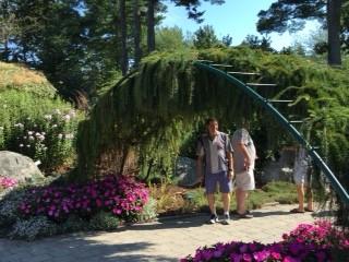 """Larch""way, Maine Botanical Gardens"