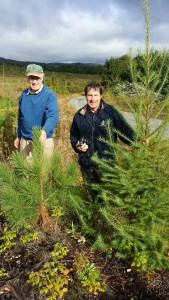 Mike Greenwood and David Maass behind a two-year old volunteer from former European larch plantation. Mike is holding red pine seedling of same age. Photo 14 September 2014 by Brian Roth