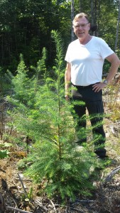 Bengt Andersson-Gull standing with one year old hybrid larch seedlings in Etna, ME. Photo 16 Aug 2015 by Brian Roth